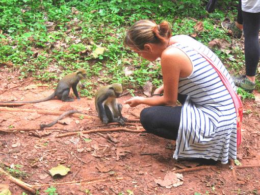 Monkeys at a monkey sanctuary in Ghana